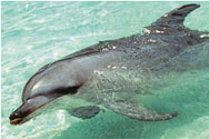 Dolphin Cruise And Snorkeling Adventure - Adult - Gold Coast