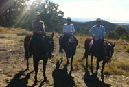 Horse RidingTrail Ride - 2.5 Hours