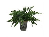 Briscoes NZ Artificial Tassel Fern in Tin Pot 24cm
