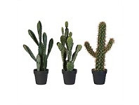 Briscoes NZ Artificial Cactus Assorted 55cm