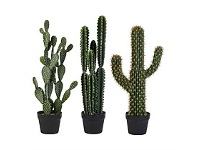 Briscoes NZ Artificial Cactus Assorted 66cm