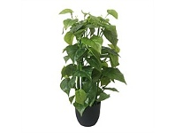 Briscoes NZ Artificial Climbing Potted Tall Pothos Plant