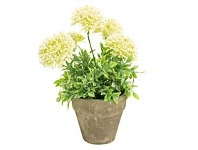 Briscoes NZ Artficial Flowers with Planter White 25cm