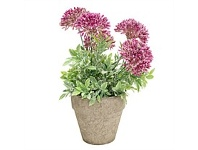Briscoes NZ Artficial Flowers with Planter Purple 25cm