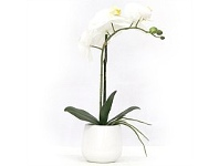 Briscoes NZ Real Touch Single Spray Artificial Orchid