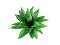 LivingStyles Artificial Agave Plant, Small