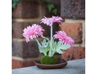 LivingStyles Set of 4 Artificial Table Daisies - Pink