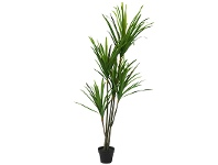 LivingStyles Set of 2 Artificial Dracena in Pot
