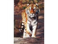 LivingStyles Iconic Tiger I Turkish Made Rug, 200x290cm