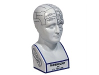 LivingStyles Porcelain Phrenology Head Bust