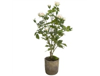 LivingStyles Artificial Rose in Terracotta Pot, White