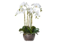 LivingStyles Artificial Phalaenopsis in Classic Bowl, Large