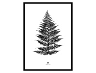 LivingStyles Noir Framed Wall Art Print, Fern Leaf, 70cm, Black