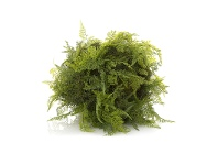 LivingStyles Artificial Mixed Fern, 50cm