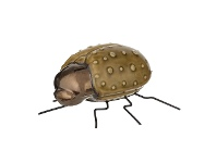 LivingStyles Insecto Ceramic Beetle Sculpture, Ground Beetle