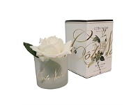 Living & Giving Fragrant Ivory White Rose In Gel